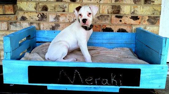 778483d20417 Επίσης μία πολύ ωραία ιδέα είναι να γράψετε πάνω το όνομα του σκύλου σας!  Δείτε πανέμορφες ιδέες και εμπευστείτε!