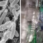 Βακτήριο που τρώει πλαστικά μπουκάλια ανοίγει νέους δρόμους στην ανακύκλωση.