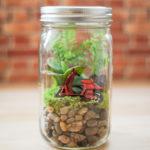 Φτιάξτε το δικό σας terrarium με βαζάκια!