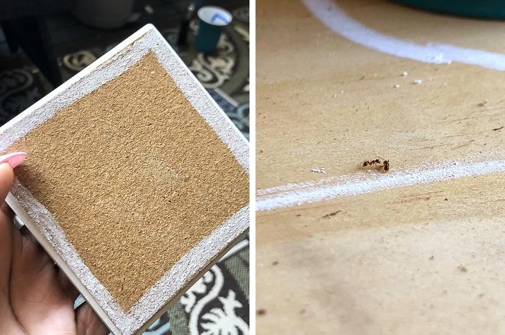κιμωλία για μικρά έντομα