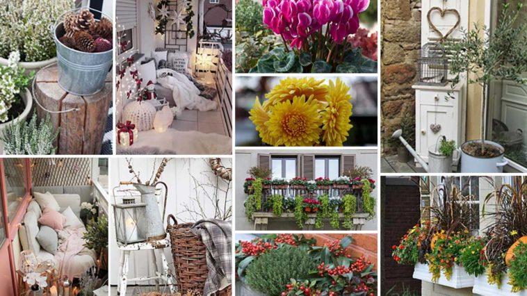 χειμερινή διακόσμηση μπαλκονιού - φυτά που ανθίζουν όλο τον χρόνο