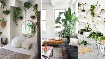 8 Εξαιρετικές ιδέες για ΦΥΤΑ ΕΣΩΤΕΡΙΚΟΥ ΧΩΡΟΥ και μικρούς κήπους για το Σπίτι ή το Διαμέρισμα σας